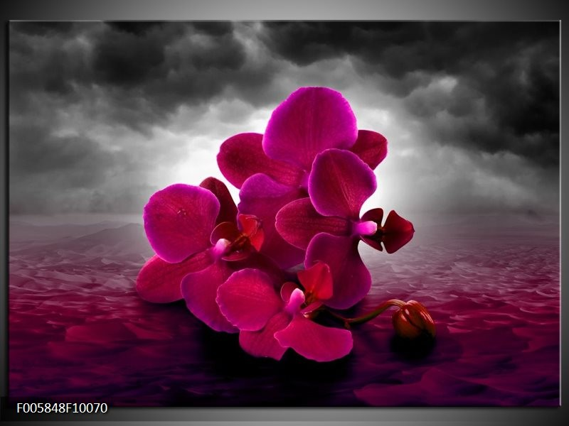 Glas schilderij Orchidee   Rood, Grijs, Paars