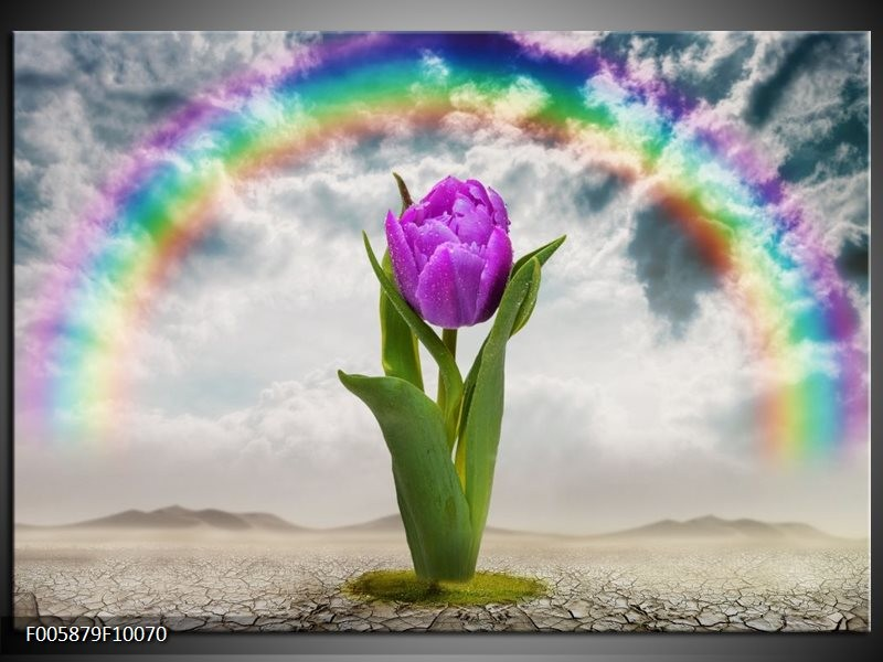 Glas schilderij Tulp | Paars, Grijs, Groen