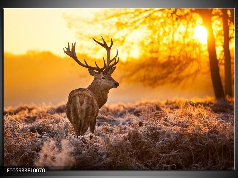 Foto canvas schilderij Hert | Bruin, Geel
