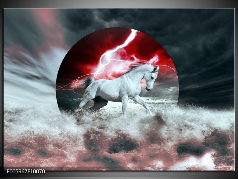 Glas schilderij Paard   Rood, Grijs, Wit