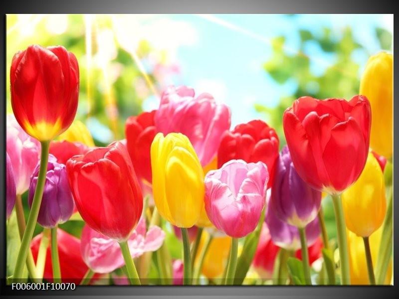 Glas schilderij Tulpen | Rood, Geel, Paars