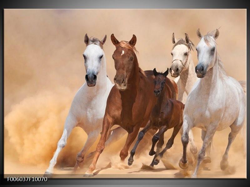 Glas schilderij Paard | Bruin, Wit, Crème