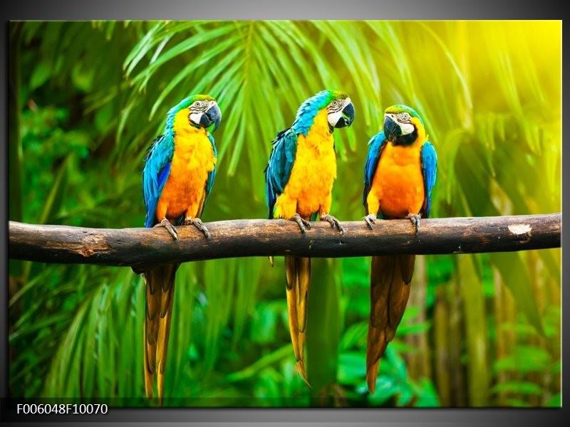 Foto canvas schilderij Vogels | Groen, Oranje, Blauw