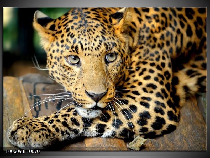 Glas schilderij Luipaard | Bruin, Zwart