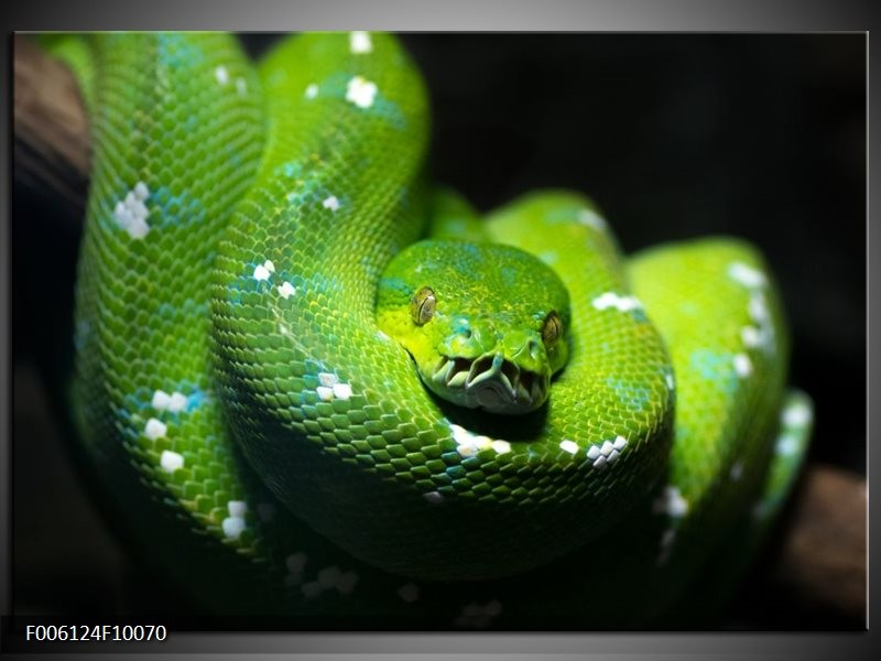 Glas schilderij Natuur | Groen, Zwart