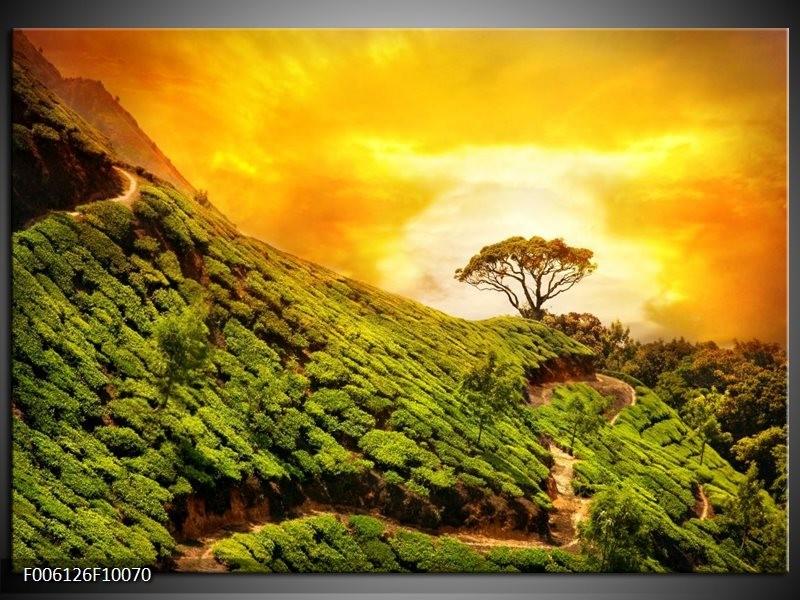 Glas schilderij Natuur | Groen, Oranje, Geel