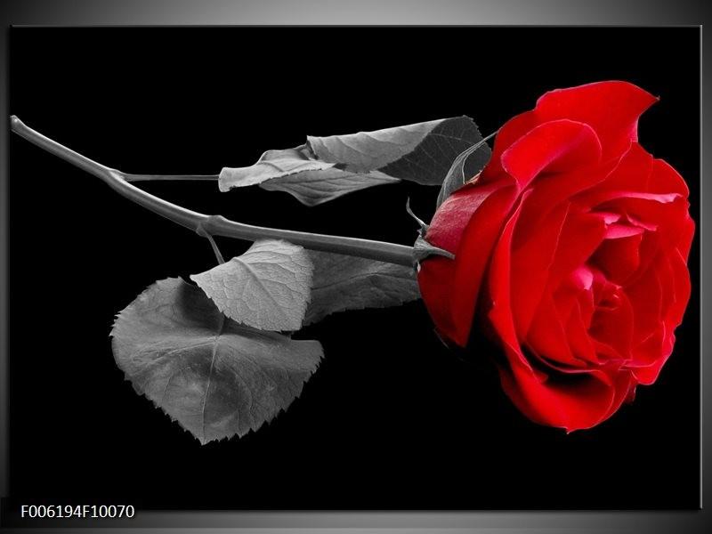 Glas schilderij Roos   Rood, Zwart