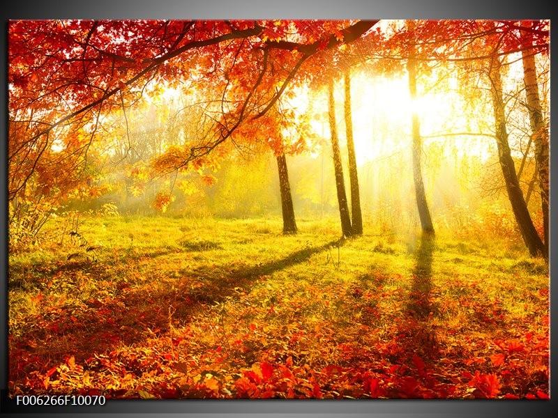 Glas schilderij Natuur | Bruin, Geel, Rood