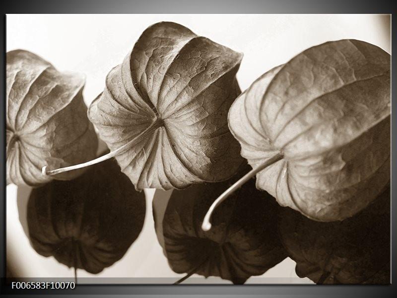 Canvas Schilderij Bloem | Crème, Sepia