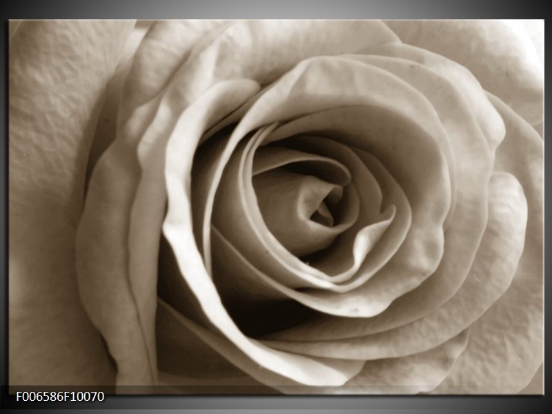 Canvas Schilderij Roos, Bloem | Sepia, Bruin
