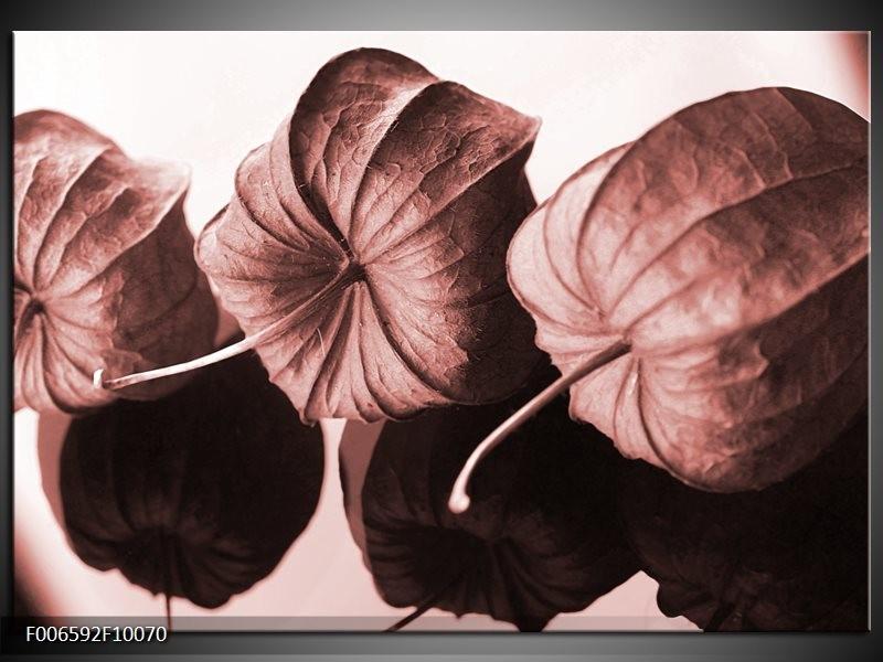 Canvas Schilderij Bloem | Bruin, Rood