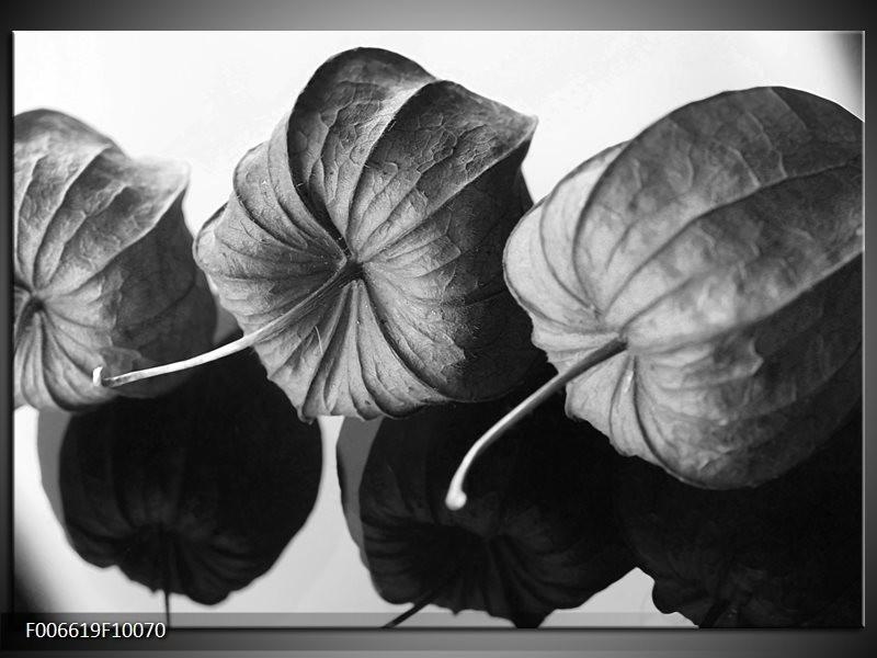 Canvas Schilderij Bloem | Grijs, Zwart