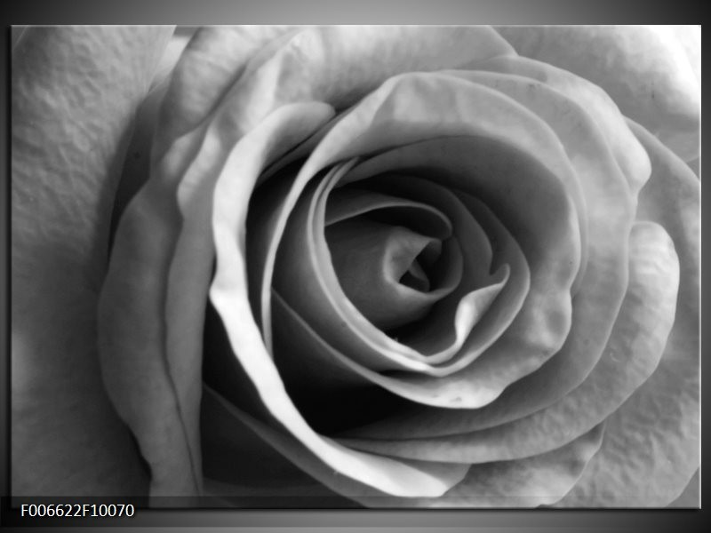 Canvas Schilderij Roos, Bloem | Grijs, Zwart