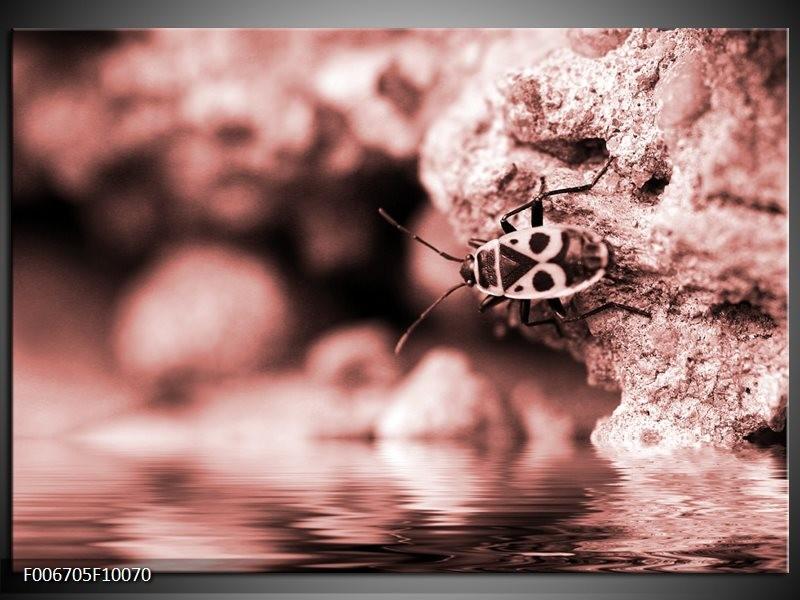 Canvas Schilderij Insect | Rood, Bruin