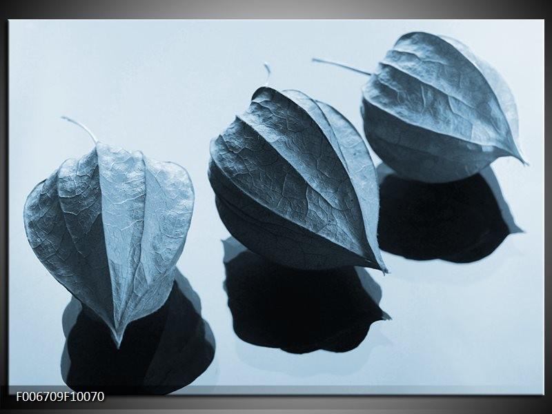 Canvas Schilderij Bloem | Blauw, Wit