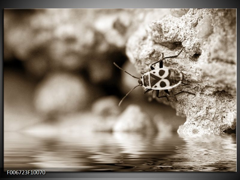 Canvas Schilderij Insect | Sepia