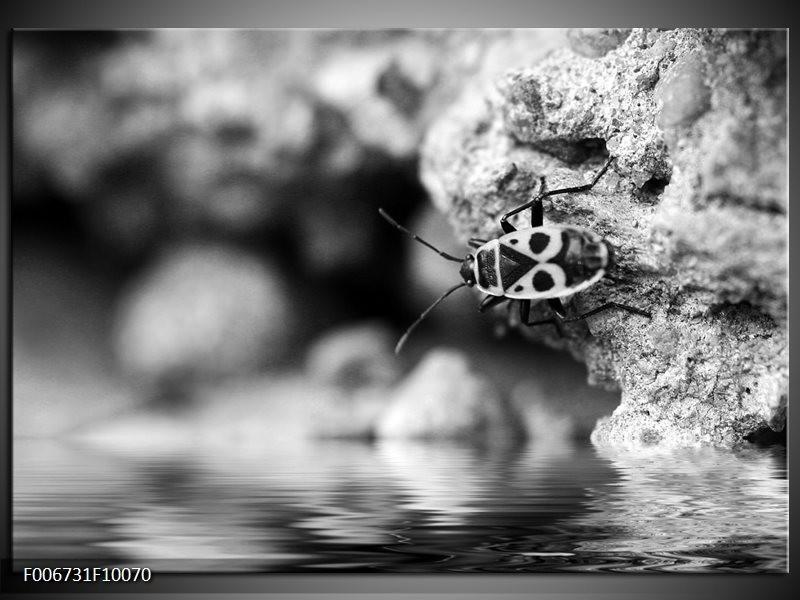 Canvas Schilderij Insect | Grijs, Zwart