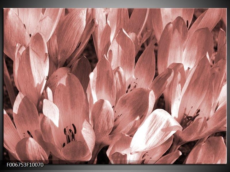 Canvas Schilderij Bloemen, Krokus | Bruin, Rood