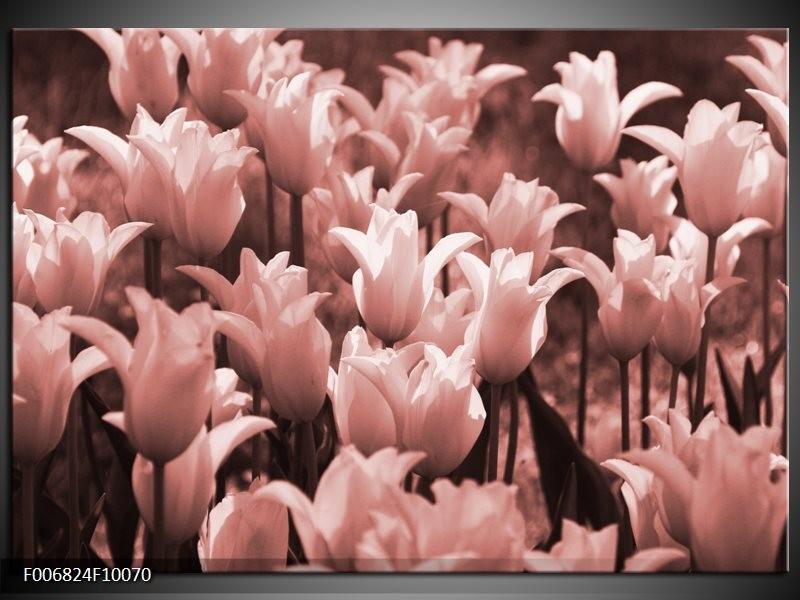 Canvas Schilderij Tulpen, Bloemen | Bruin, Rood