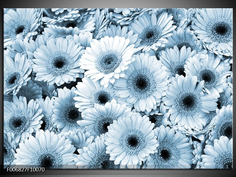 Canvas Schilderij Gerbera, Bloemen   Blauw, Grijs