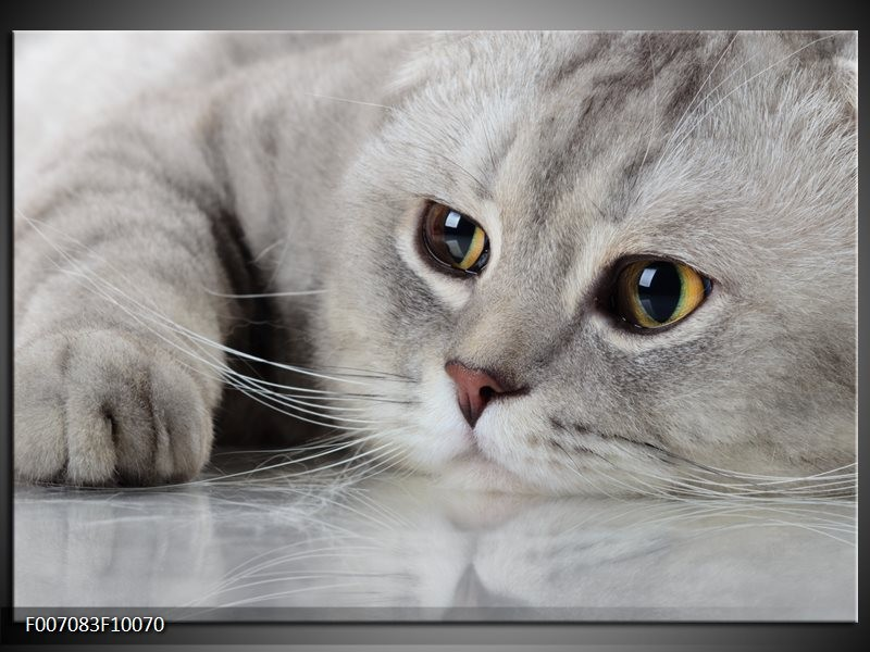 Canvas Schilderij Kat, Dieren | Grijs, Bruin