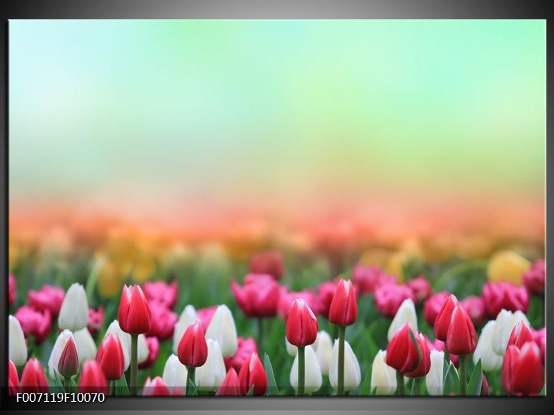 Canvas Schilderij Tulpen, Bloemen | Groen, Roze, Wit