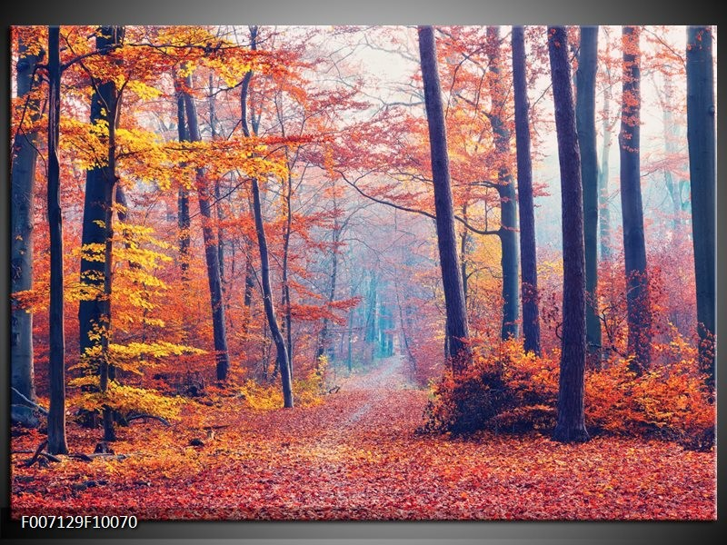 Canvas Schilderij Bos, Herfst   Oranje, Bruin, Grijs