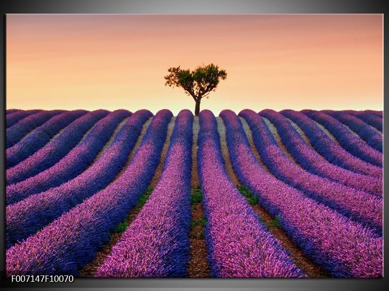 Canvas Schilderij Lavendel, Landelijk   Paars, Crème