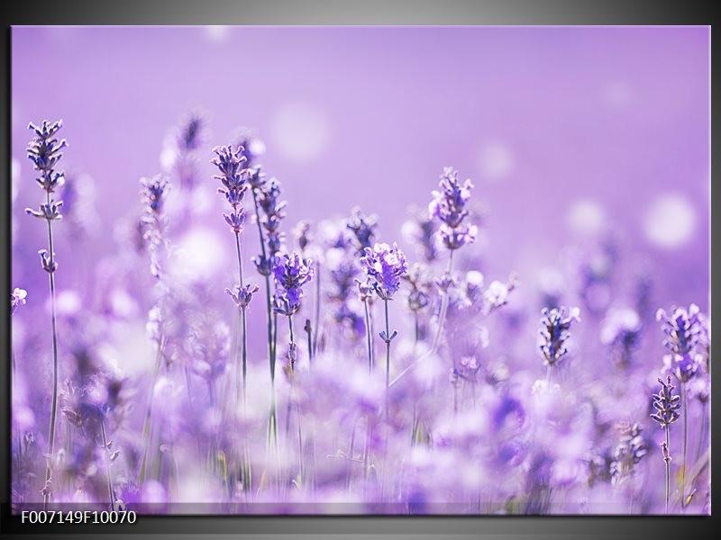 Canvas Schilderij Lavendel, Landelijk | Paars, Wit