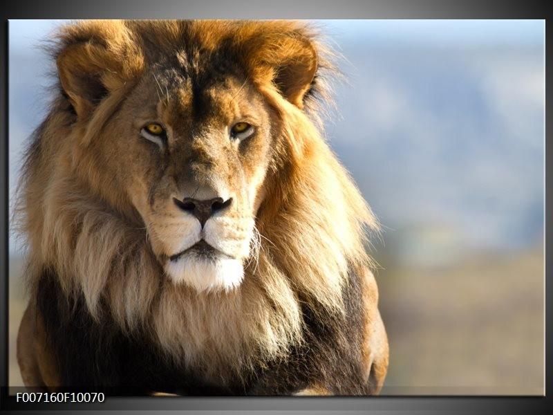 Canvas Schilderij Leeuw, Dieren | Bruin, Blauw, Grijs
