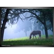 Foto canvas schilderij Paard   Grijs, Groen, Zwart