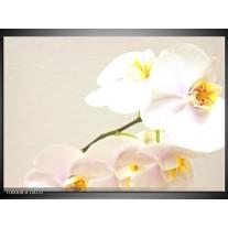 Foto canvas schilderij Orchidee | Creme, Wit, Geel