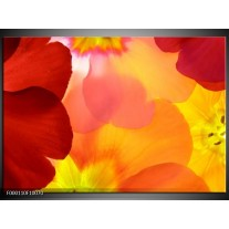 Foto canvas schilderij Blaadjes | Rood, Geel, Oranje