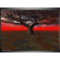 Foto canvas schilderij Boom | Rood, Bruin, Zwart