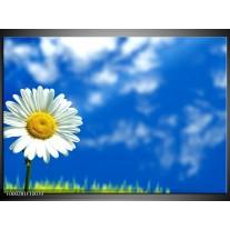 Foto canvas schilderij Bloem | Blauw, Wit, Geel