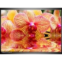 Foto canvas schilderij Orchidee | Geel, Rood, Wit
