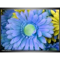 Foto canvas schilderij Gerbera | Blauw, Geel, Groen
