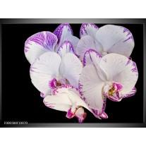 Foto canvas schilderij Orchidee | Paars, Zwart, Wit