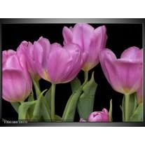 Foto canvas schilderij Tulpen   Paars, Groen, Zwart