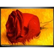 Foto canvas schilderij Roos | Rood, Geel, Goud