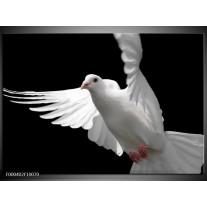 Foto canvas schilderij Vogel | Wit, Zwart, Grijs