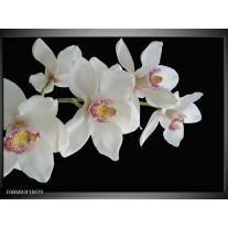Foto canvas schilderij Orchidee   Wit, Zwart, Geel