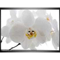 Foto canvas schilderij Orchidee | Wit, Geel,, Zwart