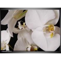 Foto canvas schilderij Orchidee | Wit, Zwart, Geel