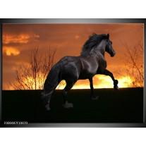 Foto canvas schilderij Paard   Zwart, Geel, Bruin