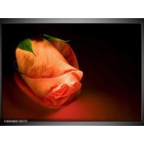 Foto canvas schilderij Roos | Oranje, Zwart, Groen