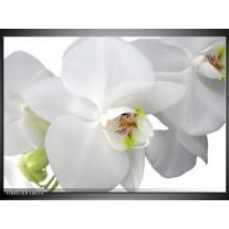 Foto canvas schilderij Orchidee | Wit, Groen