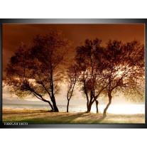 Foto canvas schilderij Bomen   Bruin, Wit, Zwart