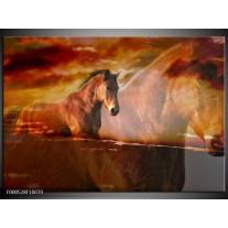 Foto canvas schilderij Paard   Bruin, Geel, Zwart