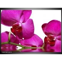 Foto canvas schilderij Orchidee | Paars, Wit, Groen